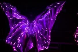 крылья (4)